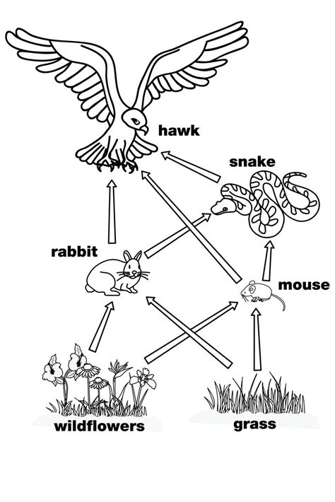 food diagram food web this is a diagram for the food web