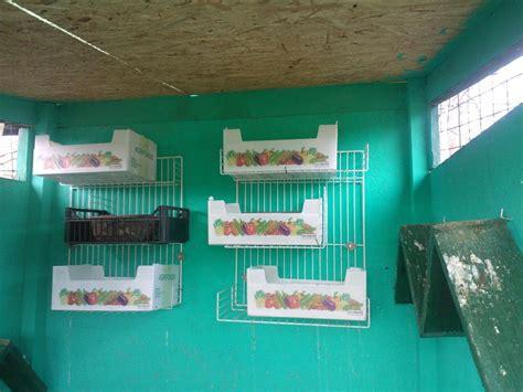gabbie per colombi nuova voliera per colombi