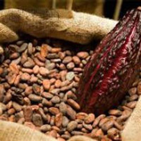 Bibit Coklat harga biji coklat jual bibit tanaman dan jasa pembuatan