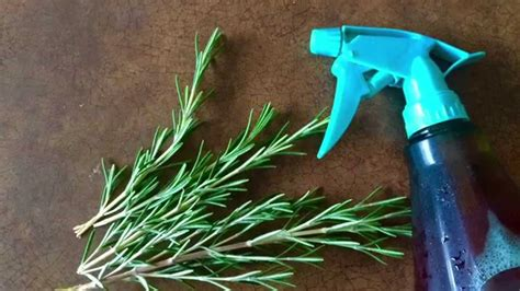Sprei Rosemary how to make leave in conditioner spray rosemary
