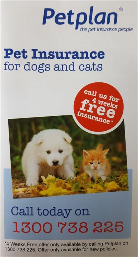 puppy insurance plans new puppy or kitten why pet insurance is important