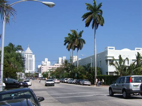 Type Of Trees by File Pennsylvania Avenue And 16th Street Miami Beach Fl