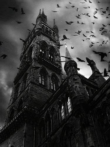 birds black and white church dark darkness image