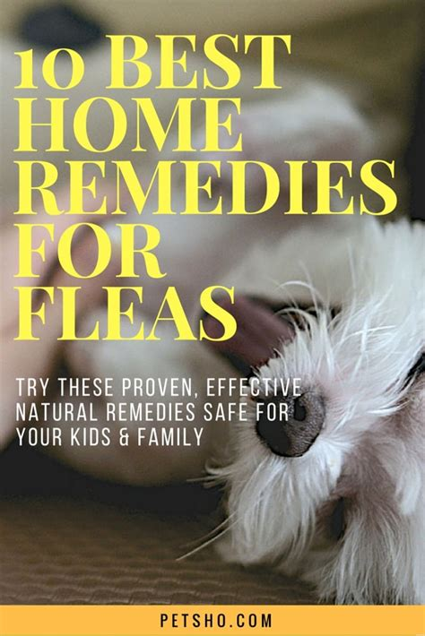 home remedies for fleas you to try pet for