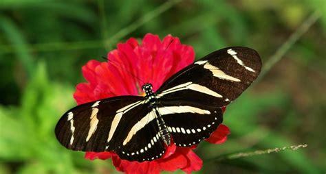 imagenes de mariposas de verdad mariposas que se portan mal