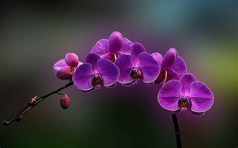 Types Of Flower Arrangements by Orchid Wallpapers Wallpaper Cave