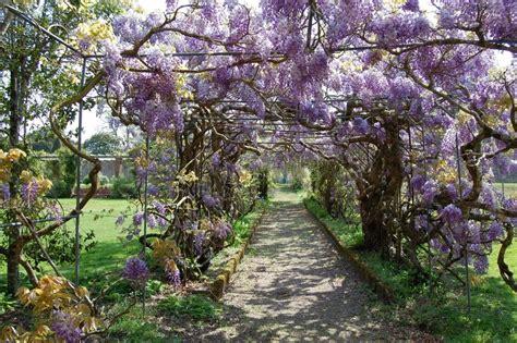 wisteria tunnels tokyo kawachi fuji garden in japan