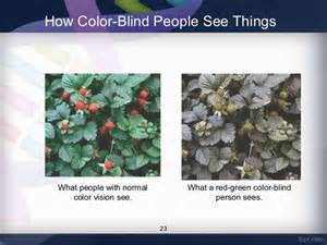 Color Blind Chromosome Prevalence Of Red Green Color Vision Defects