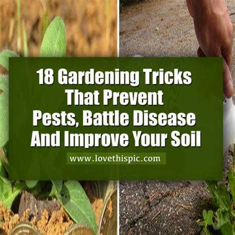 Gardening Tricks 18 Gardening Tricks That Prevent Pests Battle Disease And