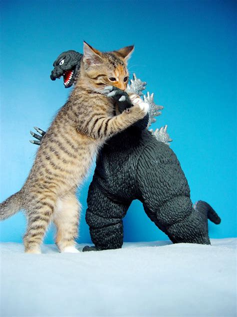 vs cat pic cat vs godzilla