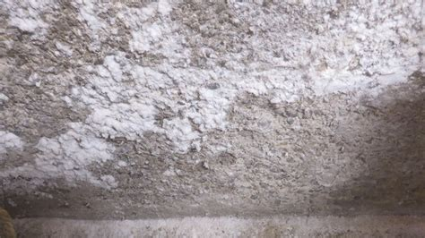 White Mold Growth in Your Home   Causes & Solutions