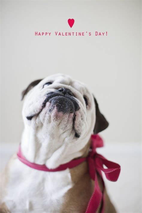 valentines day bulldog 1000 images about be my canine on