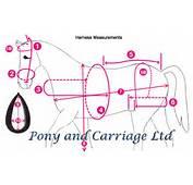 Carriage Driving Horse Harness Measurement Diagram