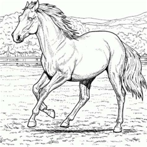 coloring pages of beautiful horses horse in the stable in horses coloring page horse in the