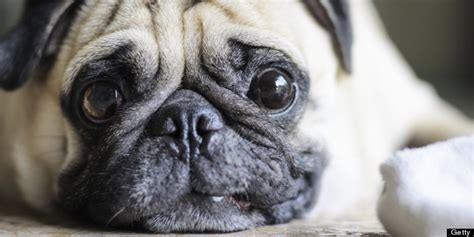 do dogs see in color do dogs see in color new study shows canines do depend on