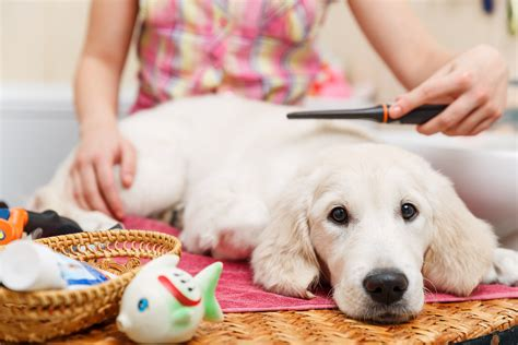 grooming places 5 reasons to use a 2 hour express pet grooming place ty d paws express lincoln