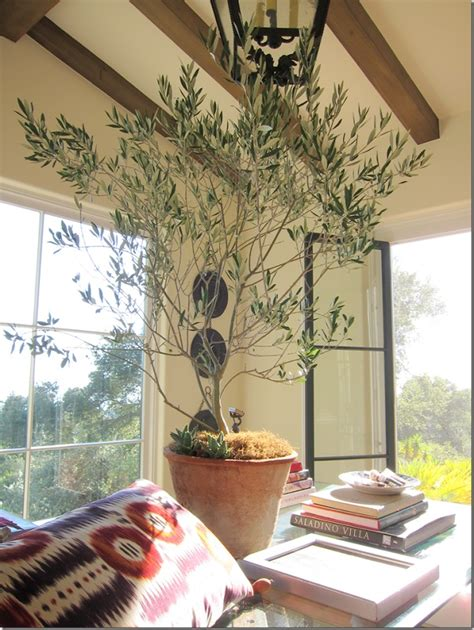 olive tree indoorsyep  house