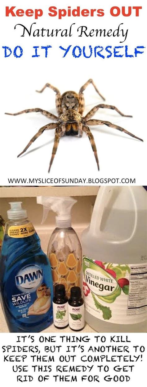 how to keep spiders out of your bed kill spiders with natural remedies effortless and easy