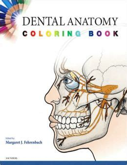anatomy coloring book barnes noble dental anatomy coloring book edition 1 by margaret j