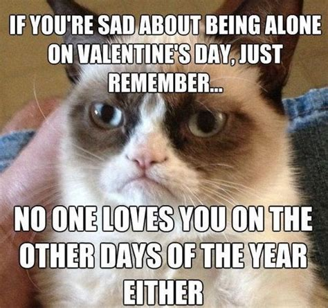 Tard The Cat Meme - 10 tard cat memes you probably know already