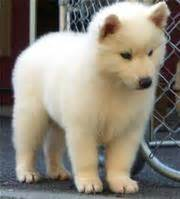 Small Dogs Free To Home Barnsley Breed Dogs For Sale In Mauritius
