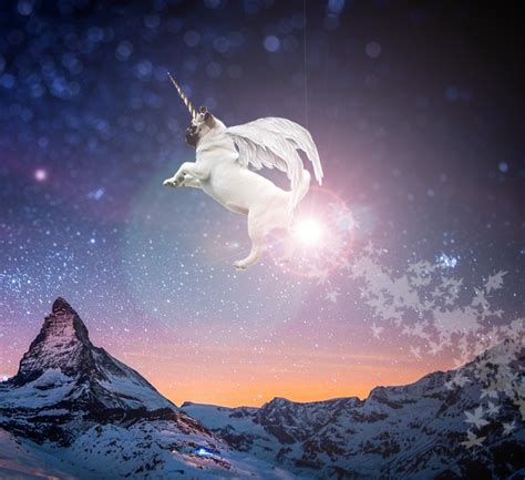 pug flying flying pug by check out on deviantart