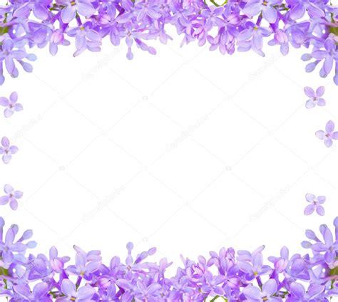 imagenes de lilas blancas marco aislado flores lila foto de stock 169 dr pas 24181411