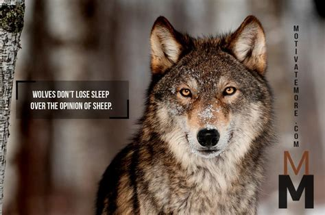 Do Wolves Shed by 44 Best Inspiring Leadership Quotes Images On