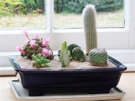 Indoor Cactus Garden Ideas Cactus Plants Garden Ideas Photograph Create An Indoor Des