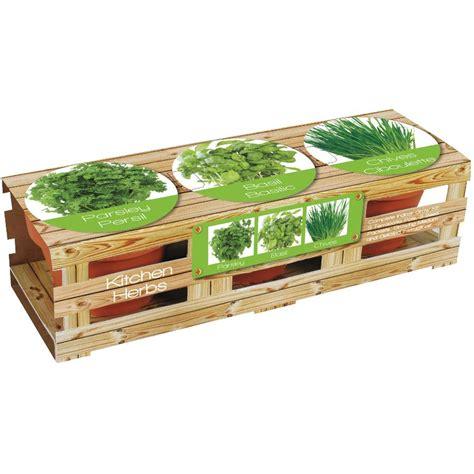 kitchen herb grow kit trio  basil parsley  chives