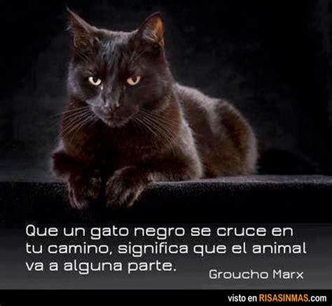 imagenes de un animal que un gato negro se cruce en tu camino significa que el