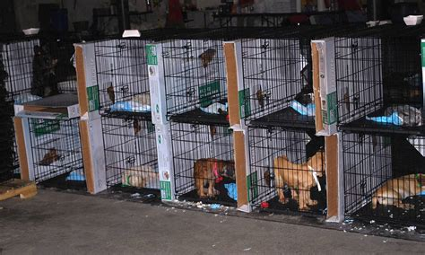puppy mill conditions schumer feds backtracking on puppy mills reports ncpr news