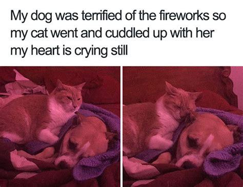 happiest dog memes      smile