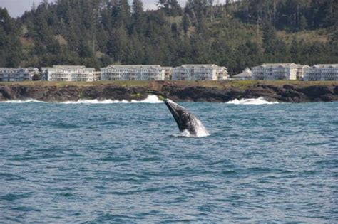 charter boat fishing depoe bay oregon thar she blows picture of tradewinds charters depoe bay
