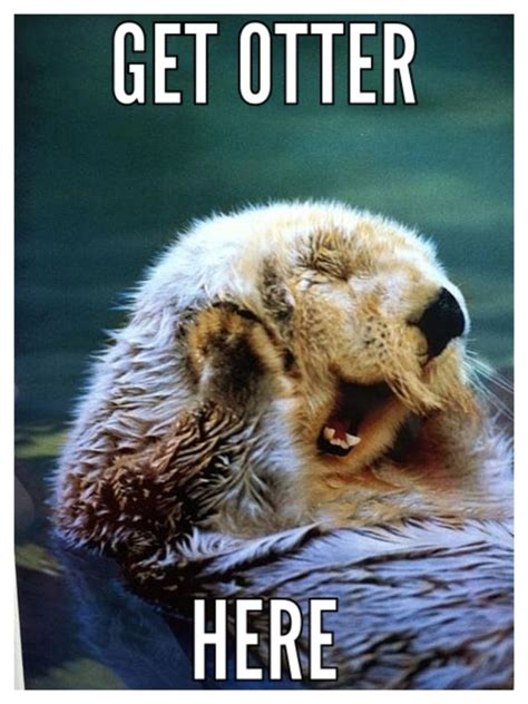 Otter Meme - 18 best otters cuz why not images on pinterest ha ha