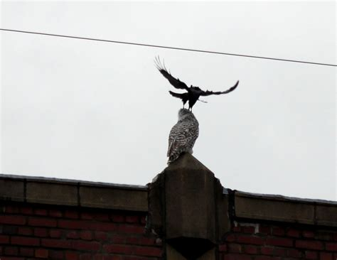 natural enemies tied to sky
