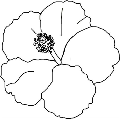 Free Printable Hibiscus Coloring Pages For Kids Printable Pictures For