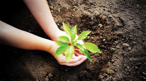 imagenes animales y plantas tecnolog 237 a para plantas y animales