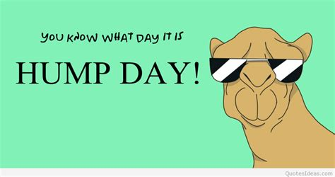 Happy Hump Day Memes - funny happy hump day quotes memes sayings 2015 2016