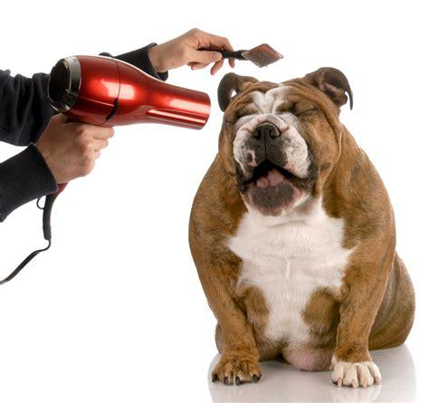 Hair Dryer For Dogs st petersburg st petersburg