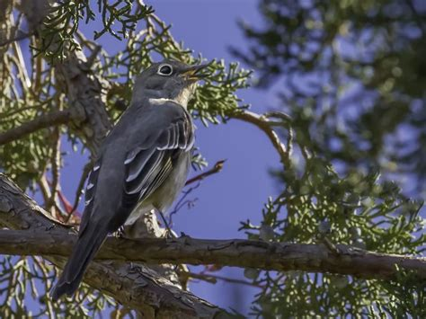 17 images about birds to see in northern nevada