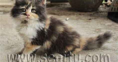 Harga Makanan Kelinci Di Petshop kucing anggora jakarta segitu petshop