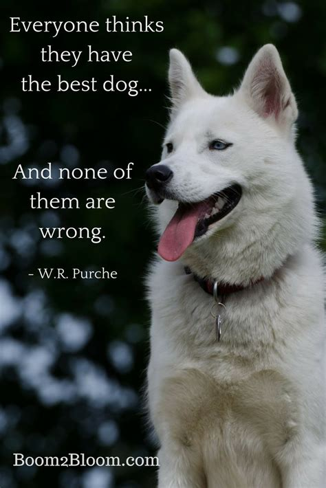quotes about animals best 25 quotes about animals ideas on quotes