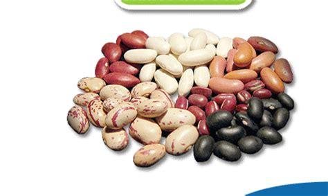 exportación de porotos farm products
