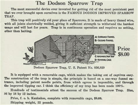 House Sparrow Trap Plans Girlshopes