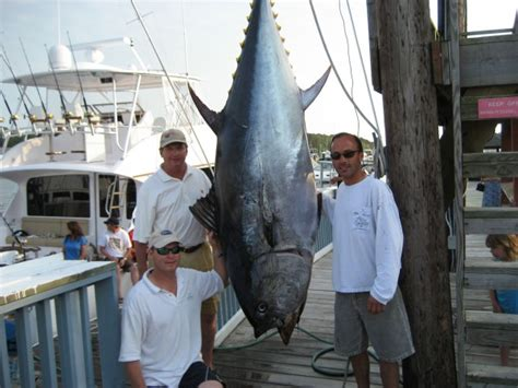 Virginia Records Virginia Saltwater Fishing Tournament State Record Bluefin Tuna Landed