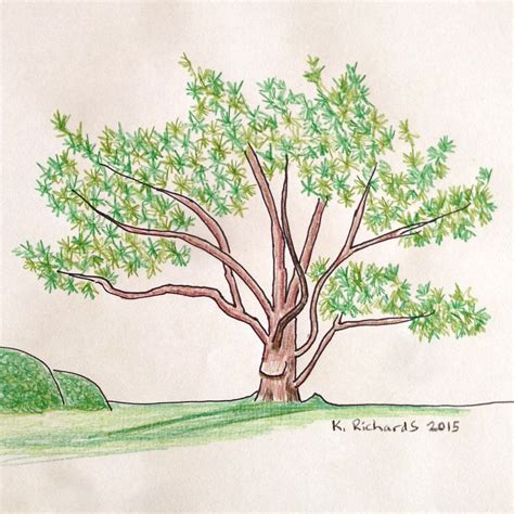 A Drawing Of A Tree by Tree Drawing Colour Www Pixshark Images Galleries