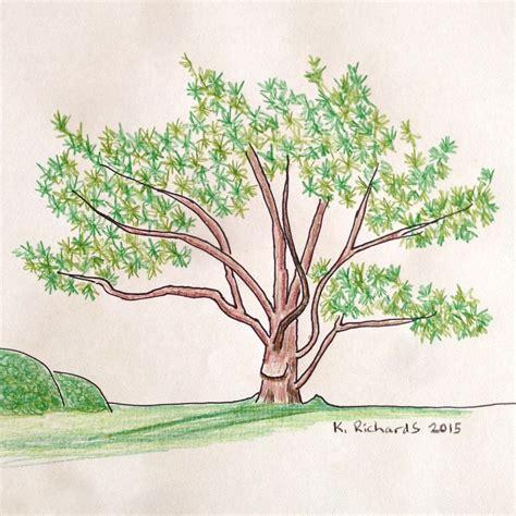 sketch a tree tree drawing ticklehead