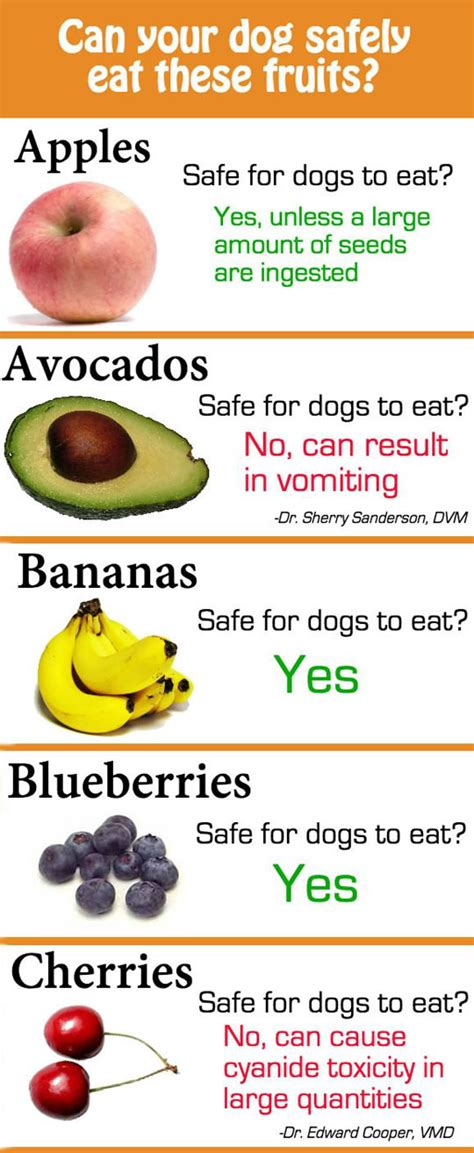 are oranges okay for dogs healthy food some fruits are not safe for your