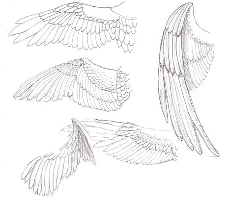Drawing Wings by Eagle Wing Sketch